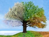 Jahreszeiten-Designs