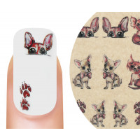 Emmi-Nail Watertattoo Chihuahua
